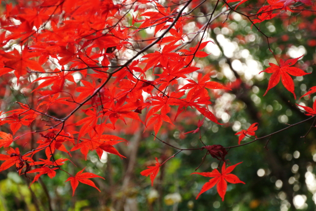f:id:kamiaki:20121205152527j:plain