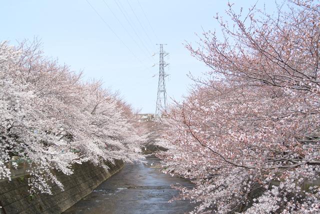 f:id:kamiaki:20130323100924j:plain