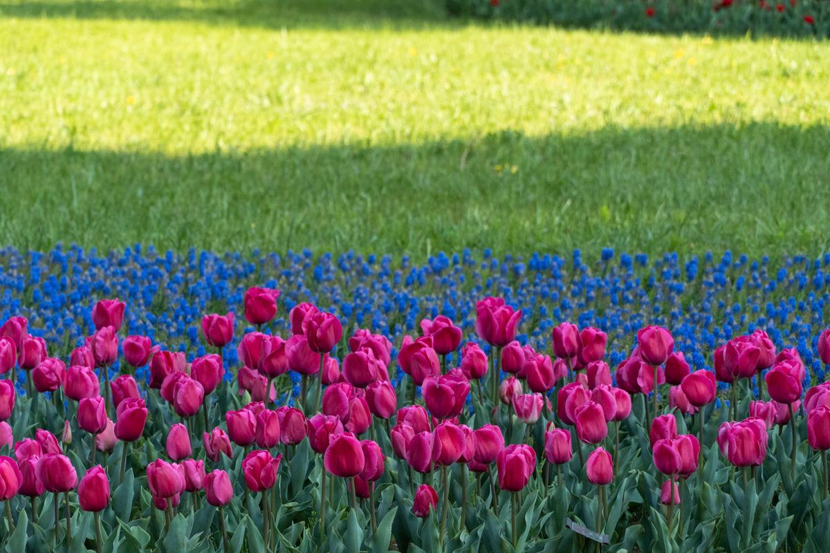 芝生と花畑の写真