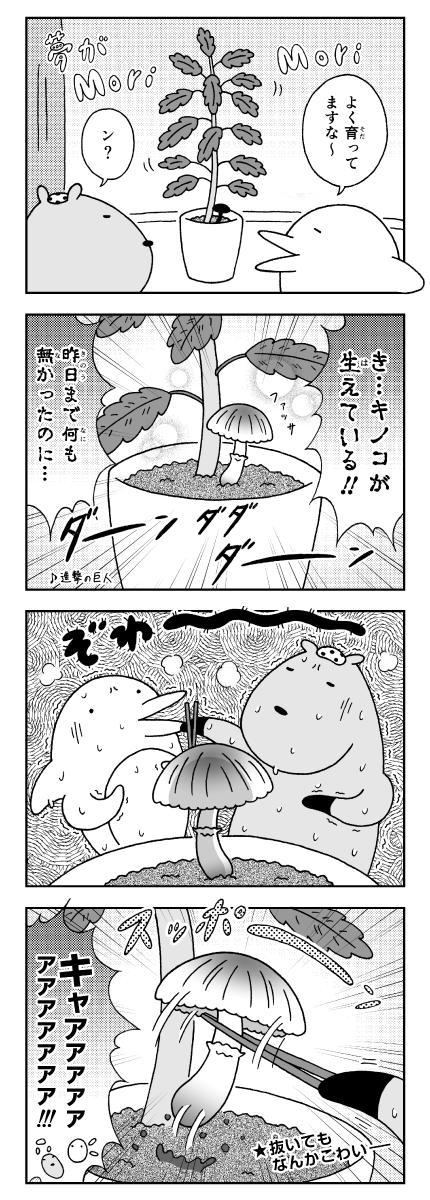 カピバラとイルカの奇妙な生活_観葉植物の土に生えるキノコ