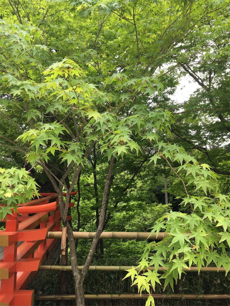 f:id:kamibutsuyoku:20160512121444j:image