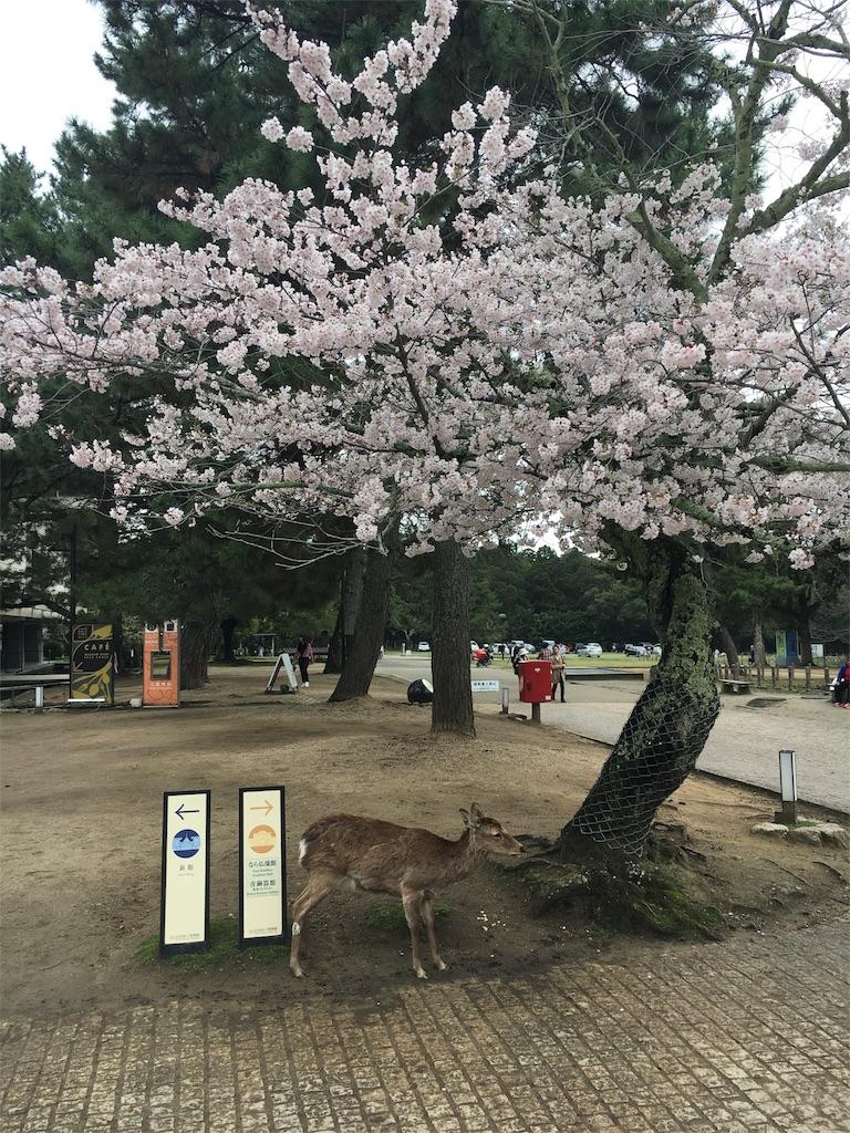f:id:kamibutsuyoku:20170409175533j:image