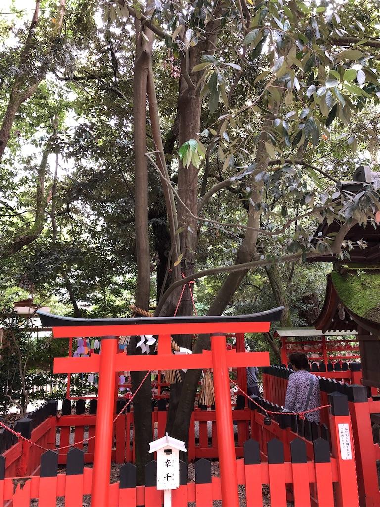 f:id:kamibutsuyoku:20190618191126j:image