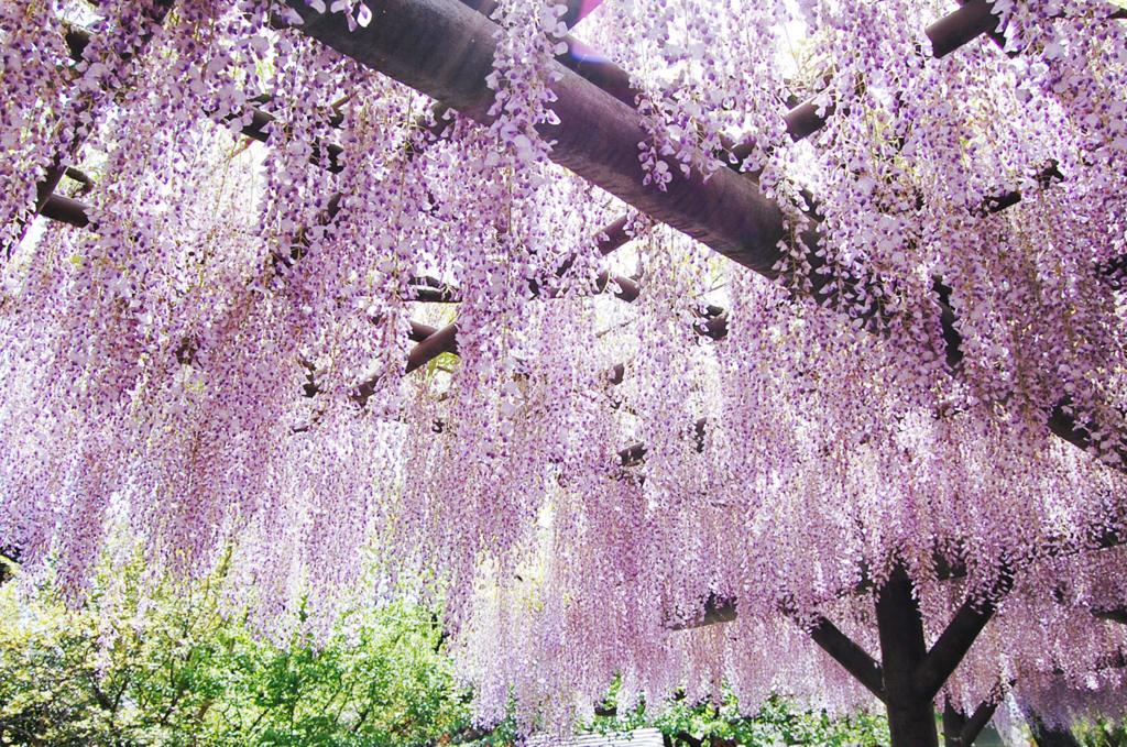 ブログの名前とアイコンと藤紫