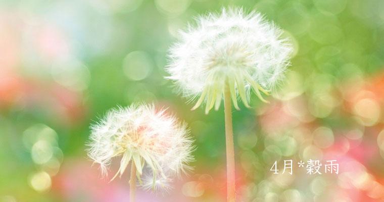 4月*穀雨