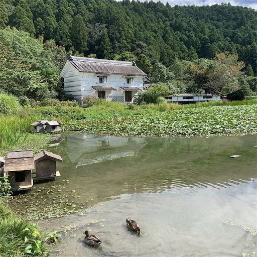 f:id:kamikami3594:20190909174045j:image