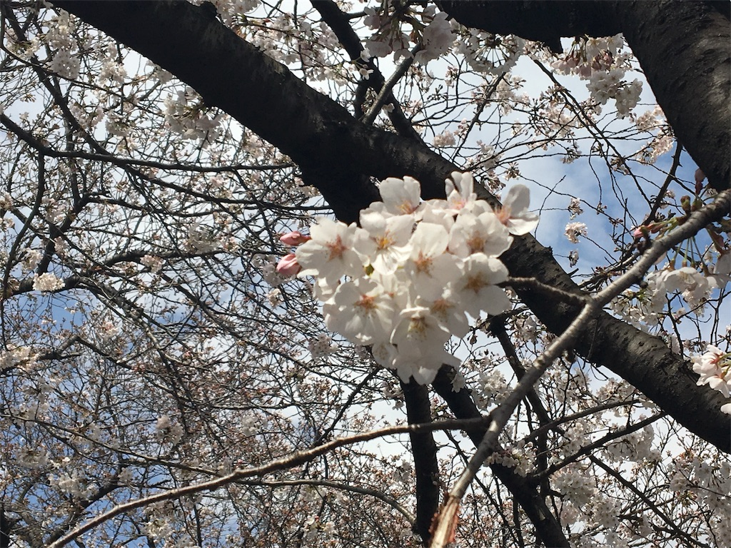 f:id:kaminashiko:20180406081330j:image
