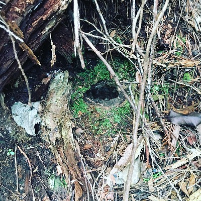 ヘボの巣の入り口