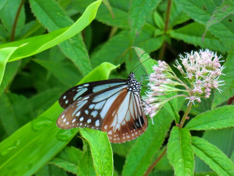 f:id:kaminoyamaspa:20120818120837j:image