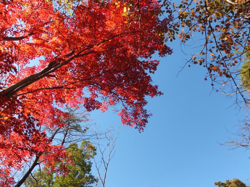 f:id:kaminoyamaspa:20131102114439j:image