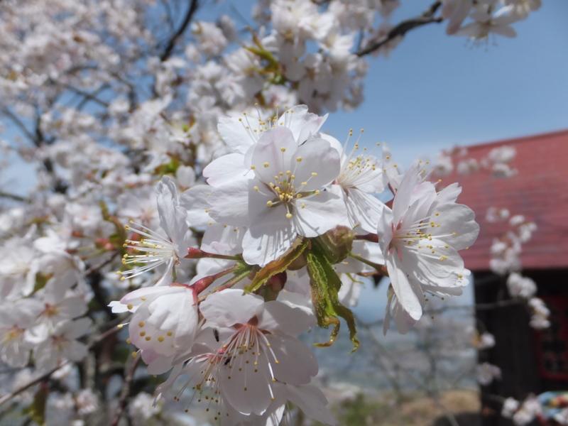 f:id:kaminoyamaspa:20140503110609j:image