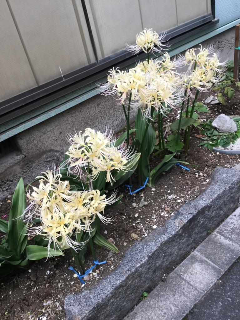 f:id:kamixkakushi:20170830111359j:plain