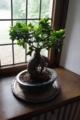 [Hattingen][Haus Kemnade]盆栽