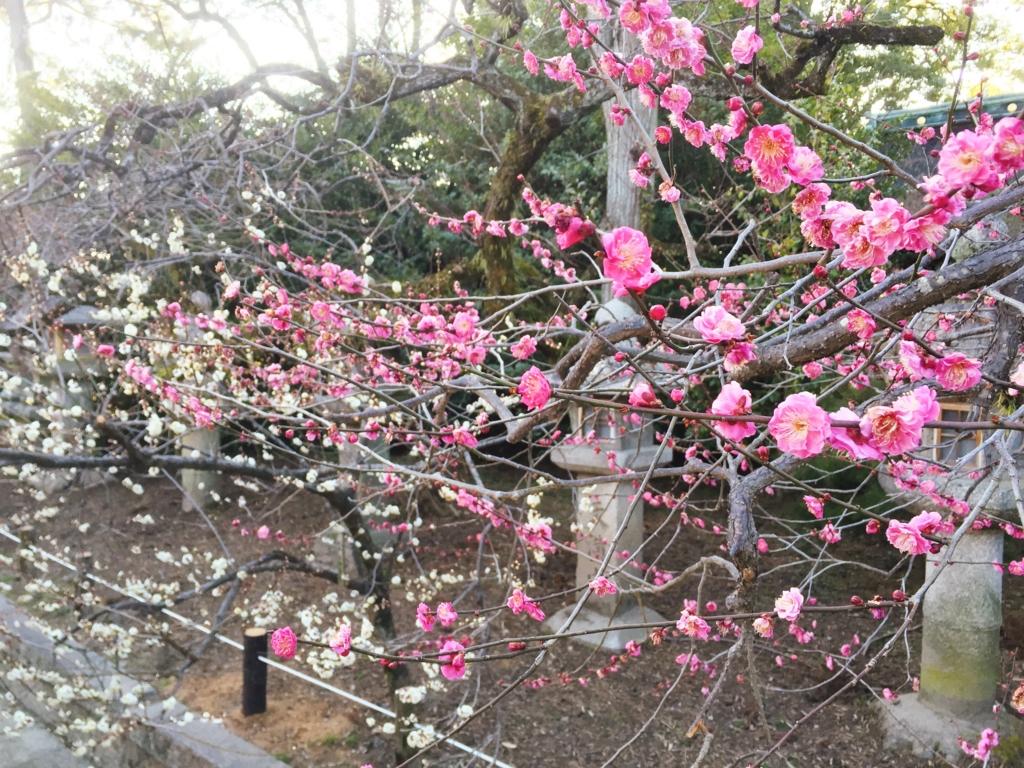 f:id:kamokamokamo:20160211220604j:plain