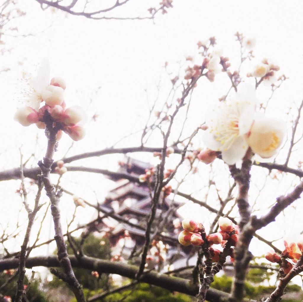 f:id:kamokamokamo:20170305215421j:plain