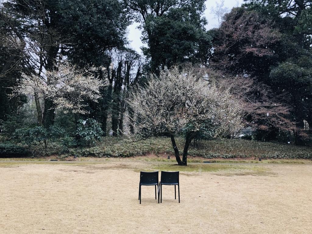f:id:kamokamokamo:20190217085330j:plain