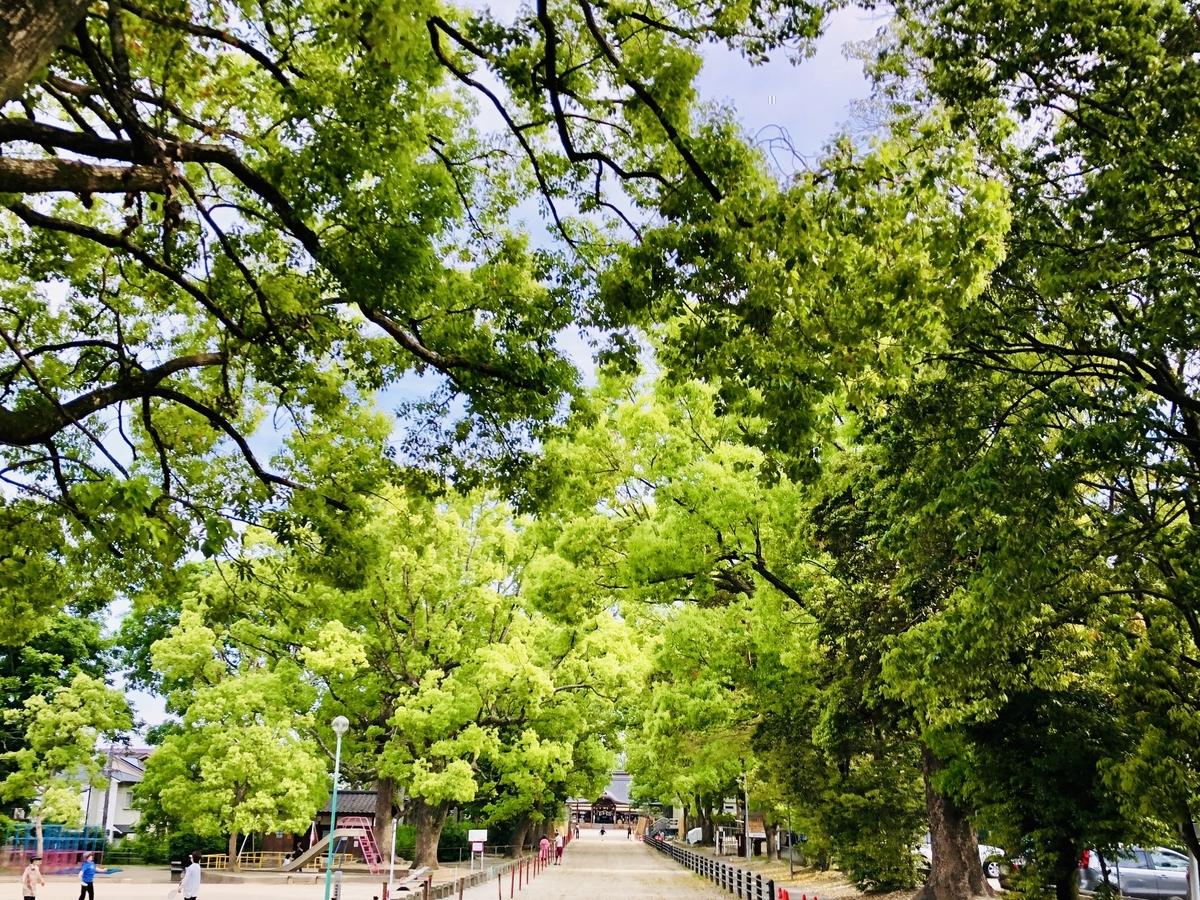 f:id:kamokamokamo:20190512192130j:plain