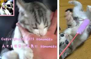 猫 画像 可愛い 面白 動物 cat kitty kitten funny cute animal jpg f:id:kamomako:20150823121209j:plain