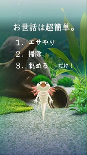 f:id:kamomako:20181218185907j:plain