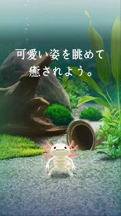 f:id:kamomako:20181218185912j:plain
