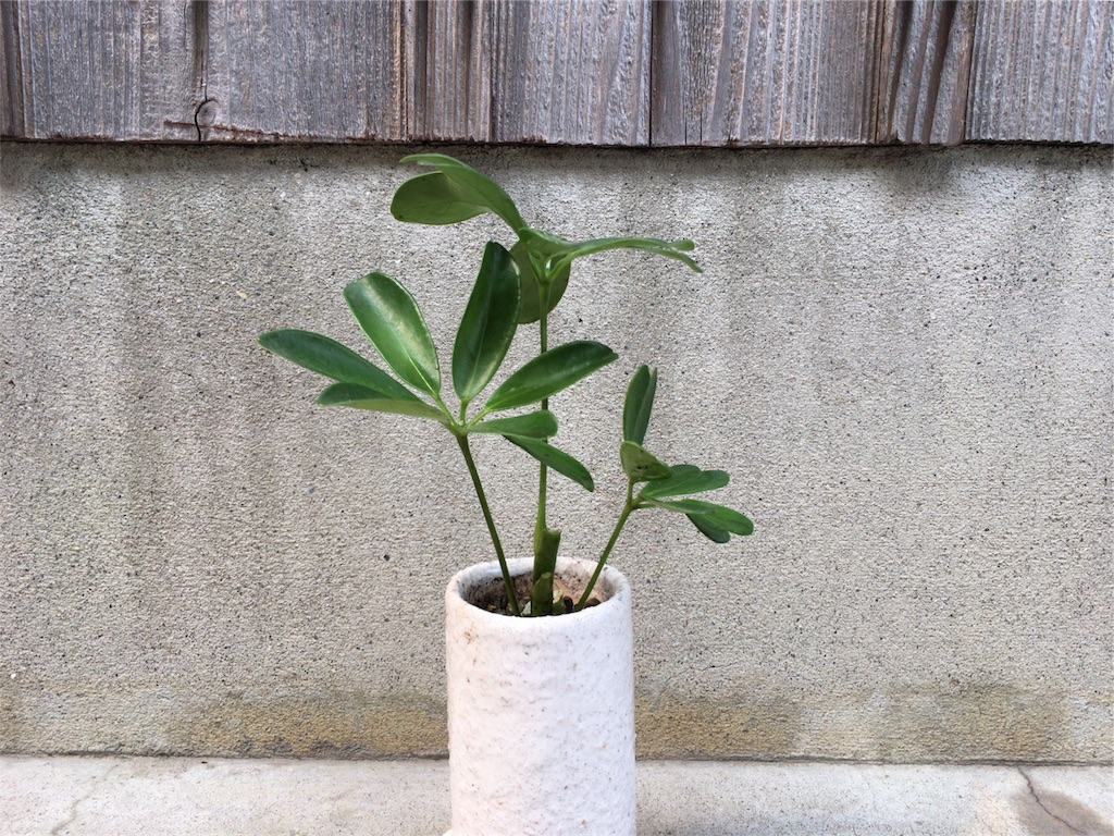 f:id:kamome-plants:20170808233347j:image