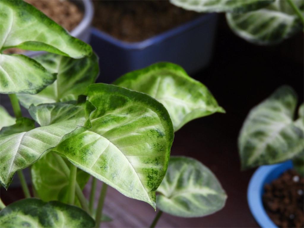f:id:kamome-plants:20170925014123j:image