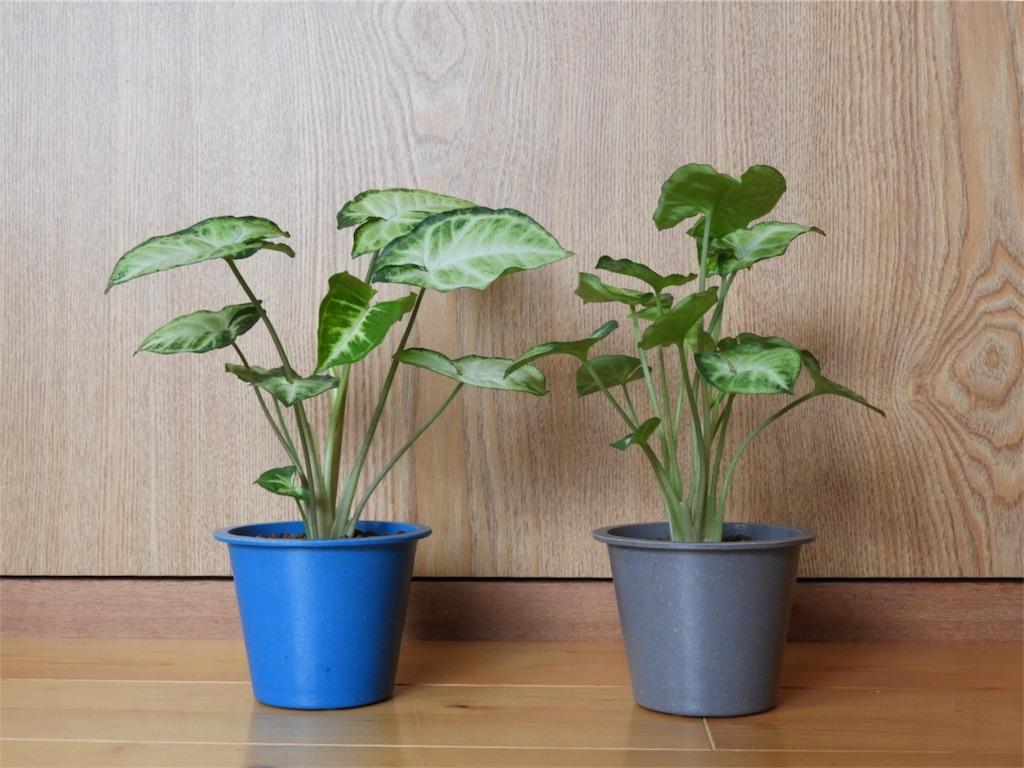 f:id:kamome-plants:20170928220913j:image