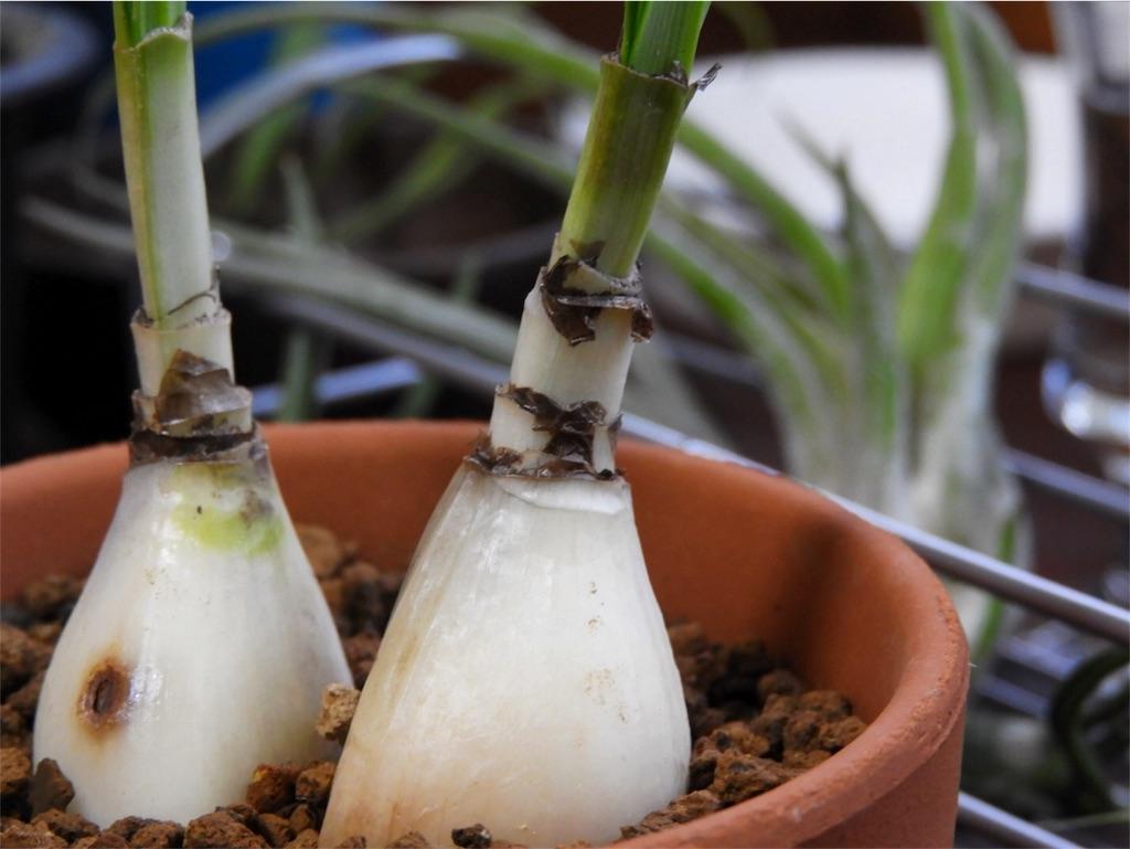 f:id:kamome-plants:20170930203440j:image