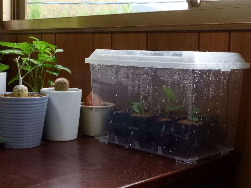 f:id:kamome-plants:20171007171158j:image