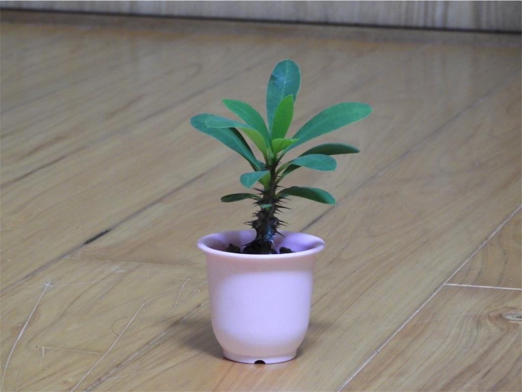 f:id:kamome-plants:20171016014326j:image