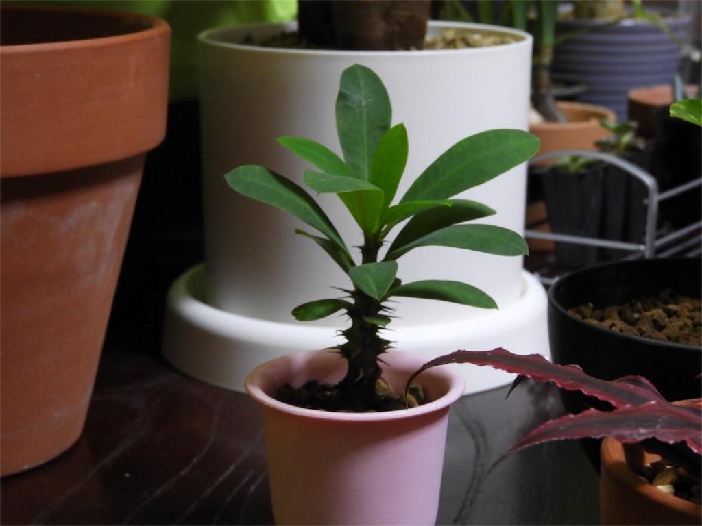 f:id:kamome-plants:20171016014759j:image