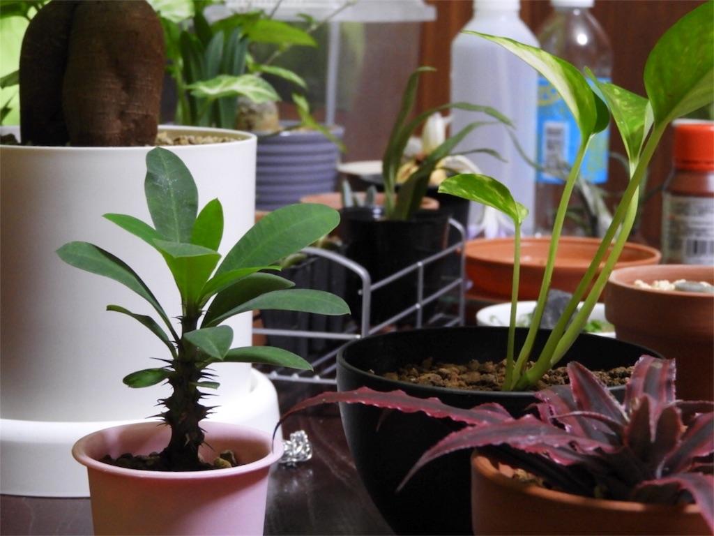 f:id:kamome-plants:20171016015023j:image