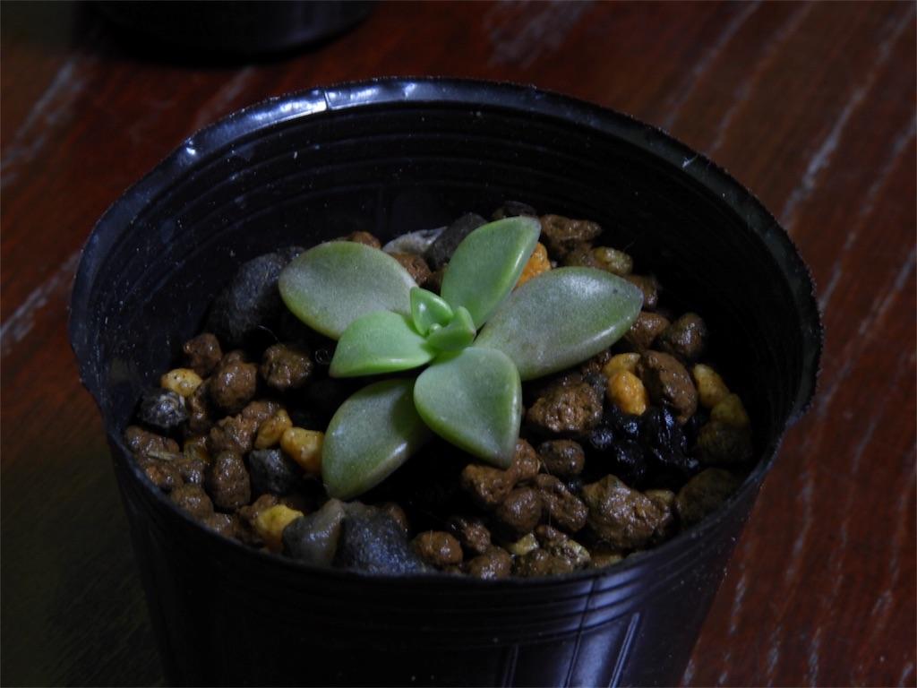 f:id:kamome-plants:20171023215054j:image