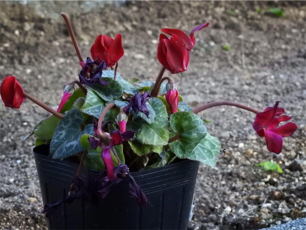 f:id:kamome-plants:20171209191223j:image