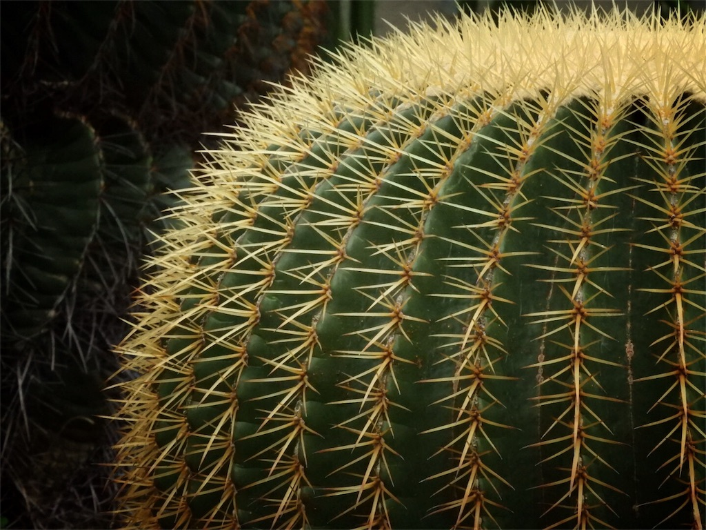 f:id:kamome-plants:20171210235016j:image