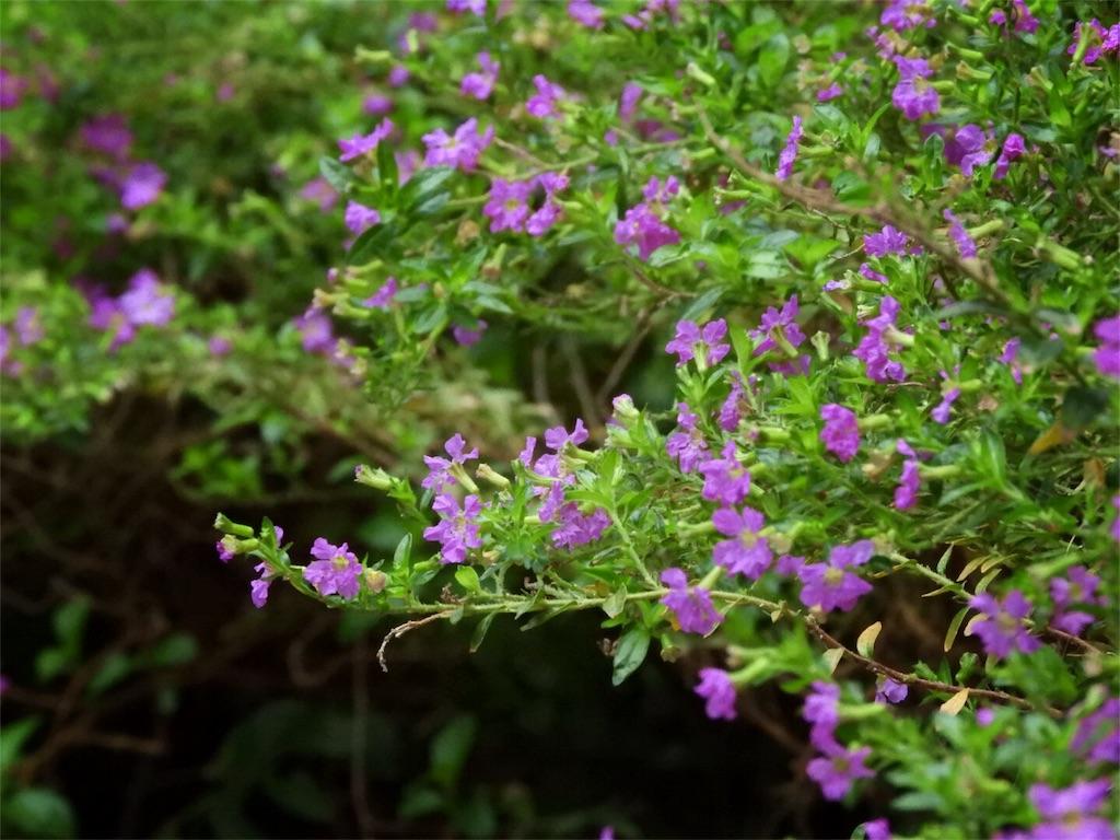 f:id:kamome-plants:20171210235258j:image