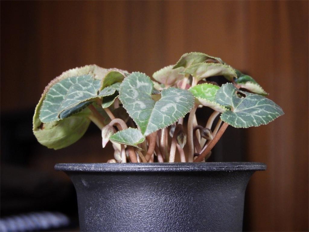 f:id:kamome-plants:20171225225449j:image