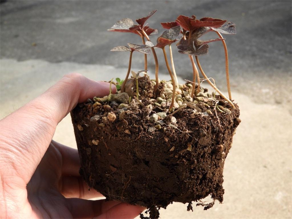 f:id:kamome-plants:20171227000554j:image