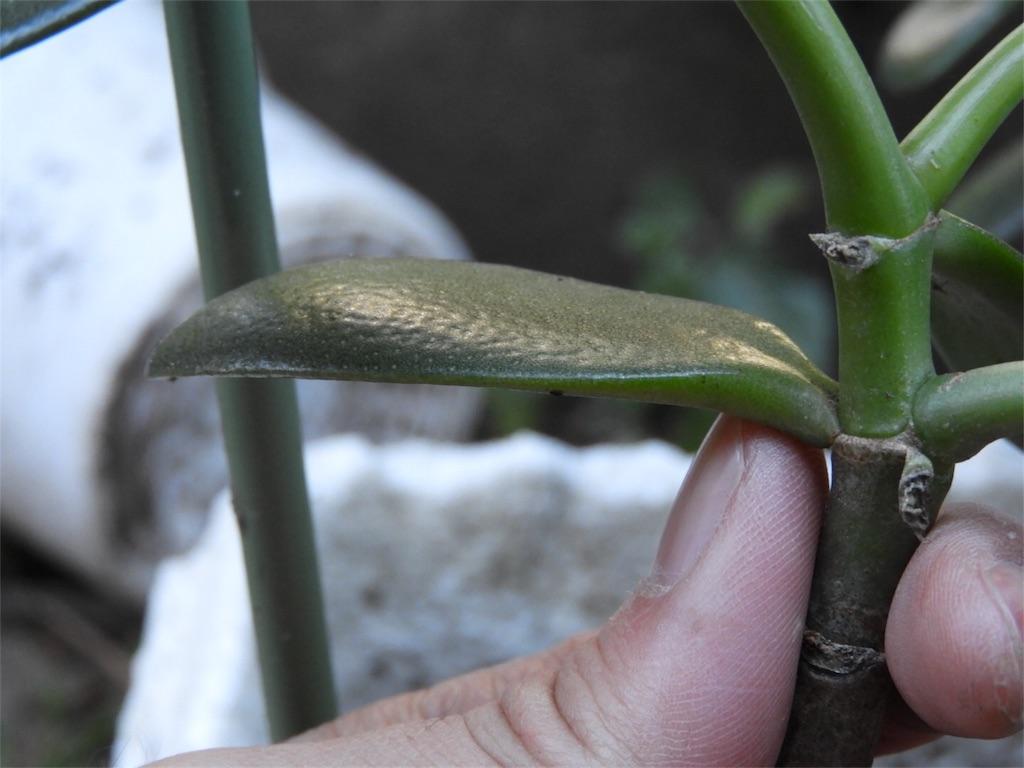 f:id:kamome-plants:20171227232459j:image
