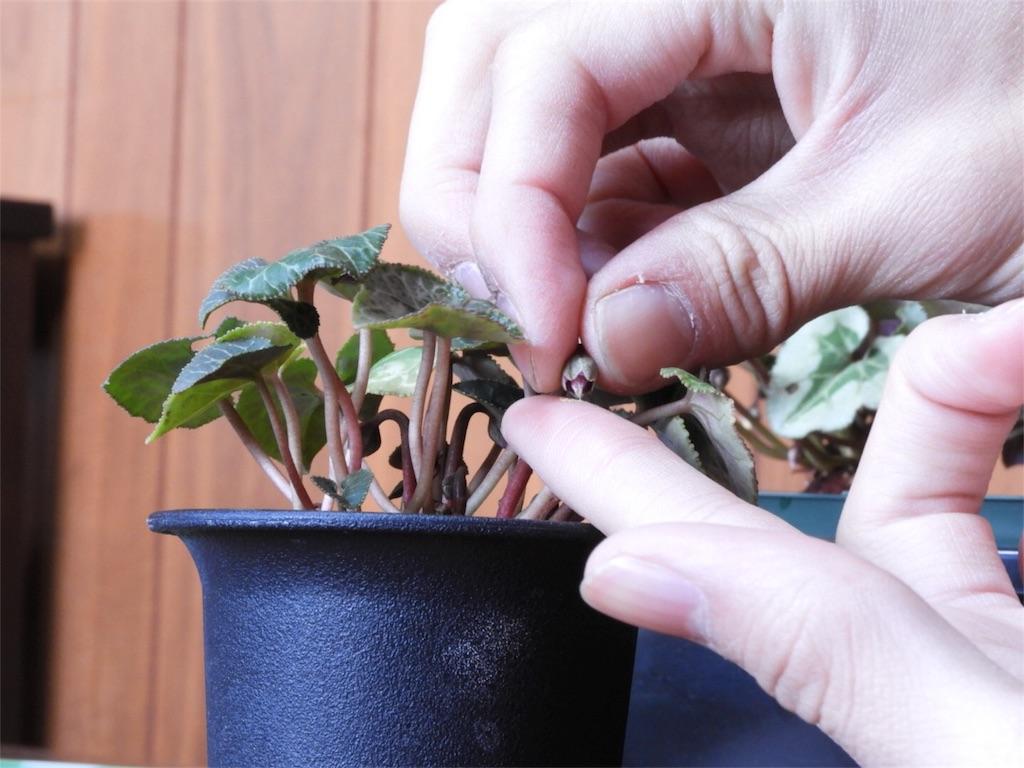 f:id:kamome-plants:20180104003639j:image