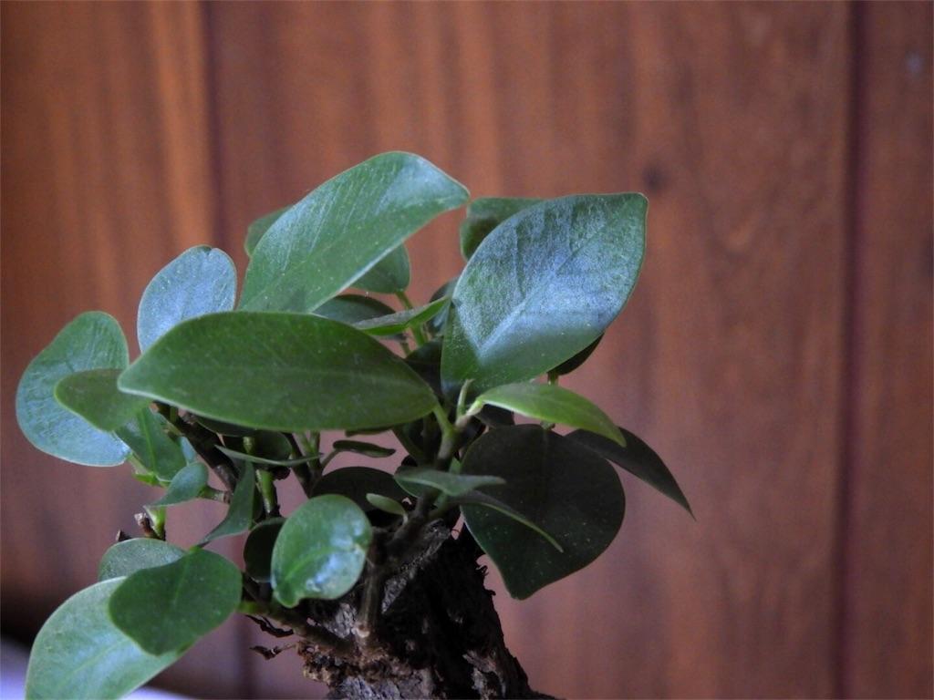 f:id:kamome-plants:20180116014713j:image