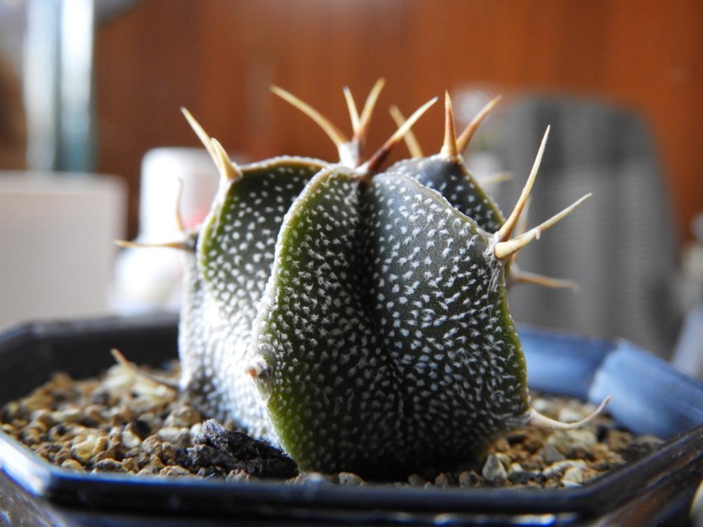 f:id:kamome-plants:20180128015534j:plain