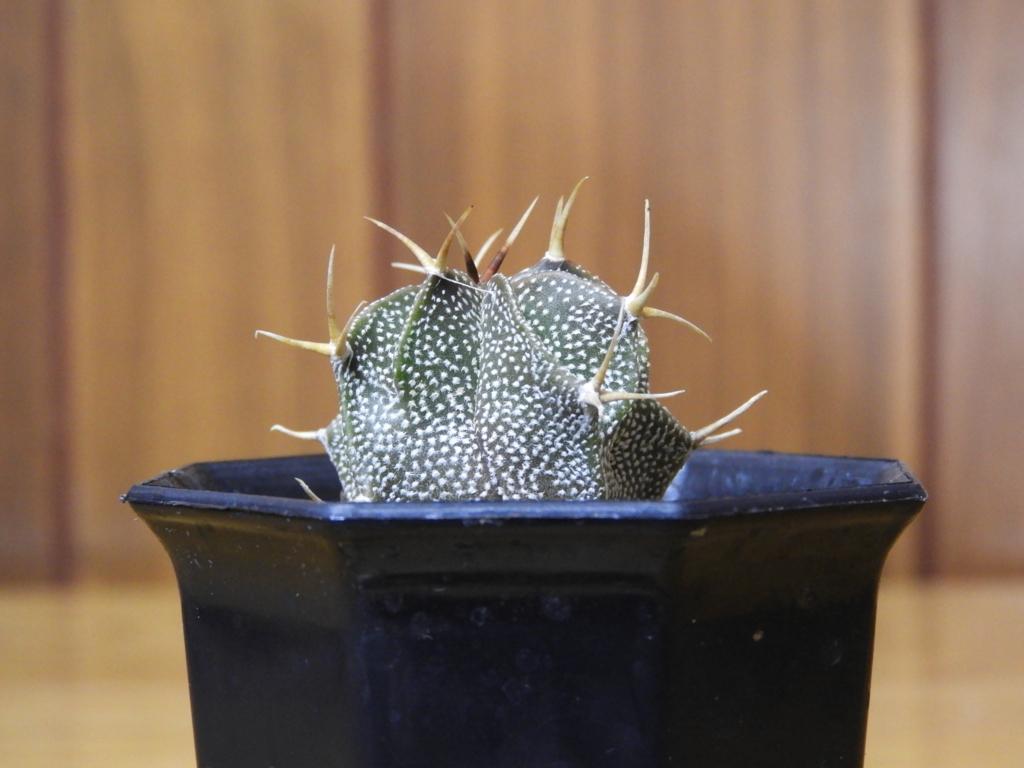 f:id:kamome-plants:20180128022320j:plain