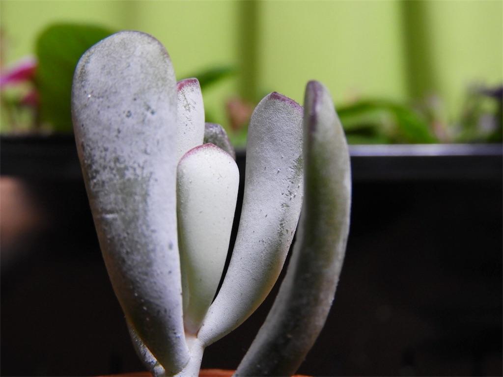 f:id:kamome-plants:20180218165336j:image