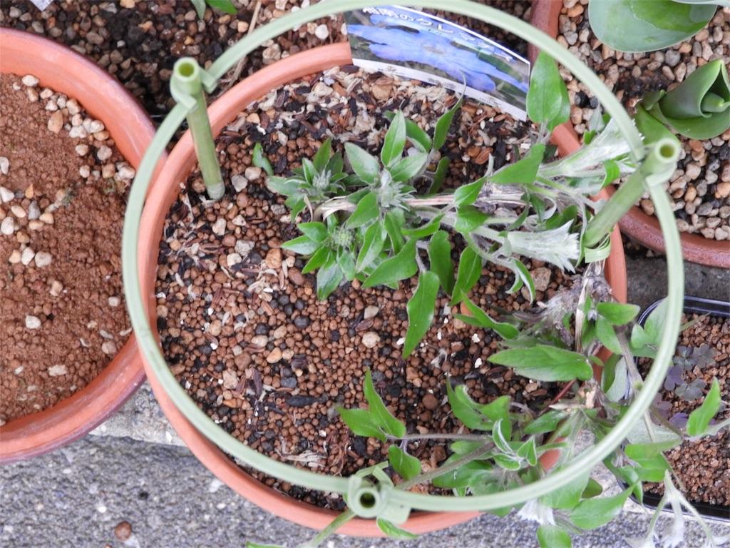 f:id:kamome-plants:20180321222323j:image