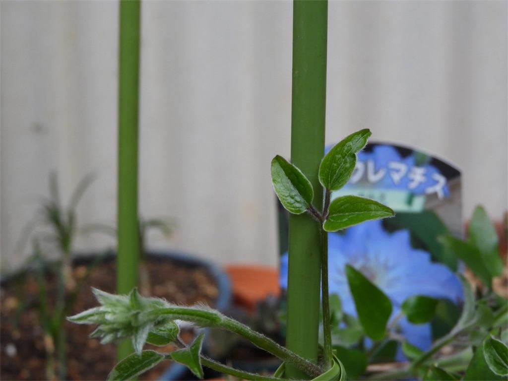 f:id:kamome-plants:20180321223359j:image