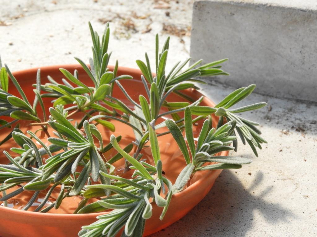 f:id:kamome-plants:20180326211021j:plain