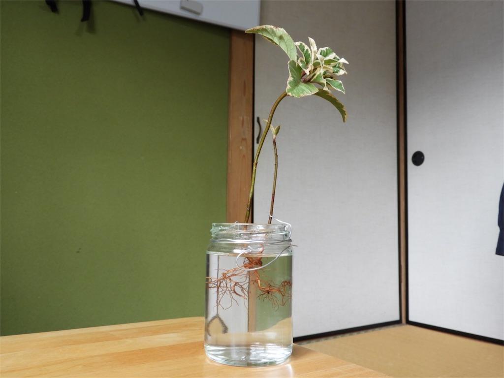 f:id:kamome-plants:20180401120708j:image