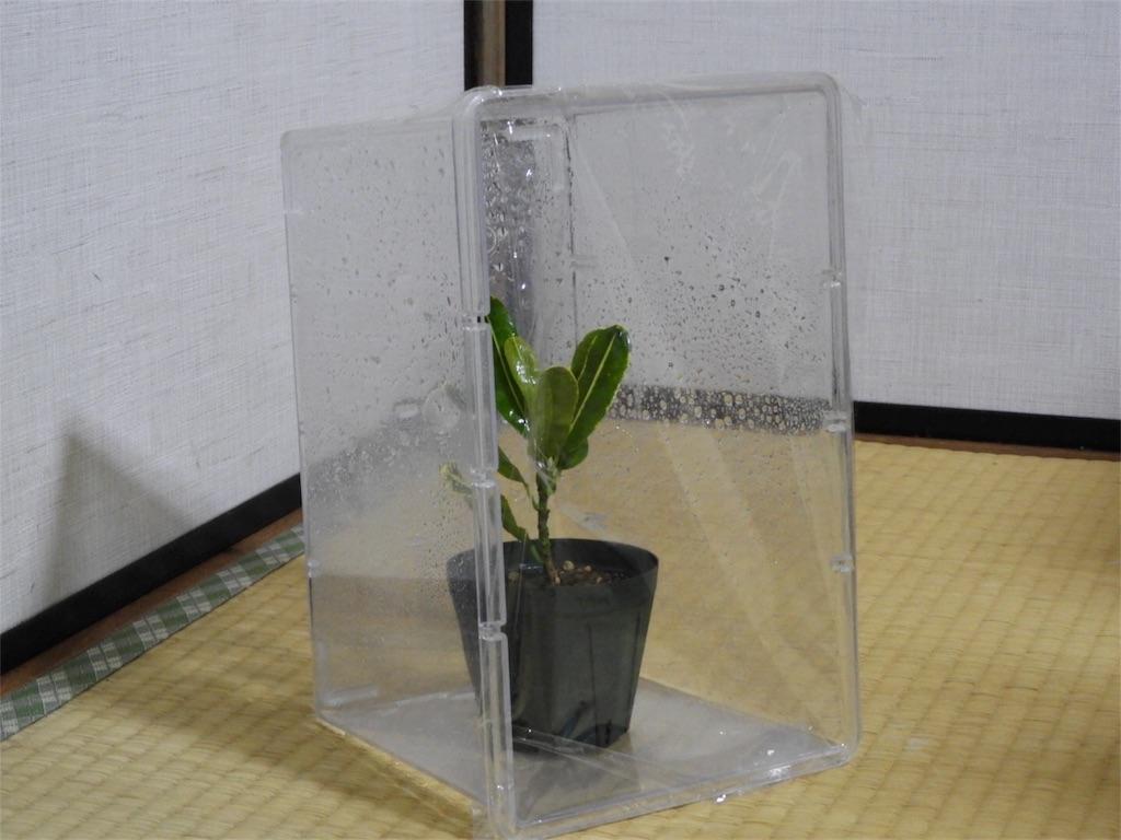 f:id:kamome-plants:20180403135957j:image