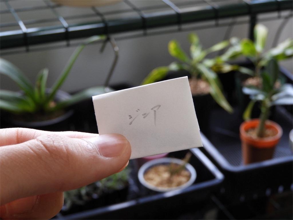 f:id:kamome-plants:20180422153059j:image